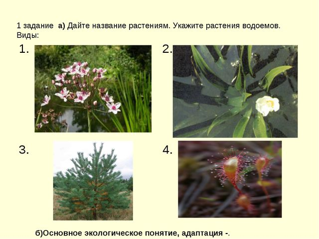 1 задание а) Дайте название растениям. Укажите растения водоемов. Виды: б)Ос...