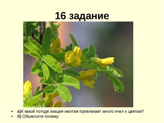 16 задание а)К какой погоде акация желтая привлекает много пчел к цветам? б)...