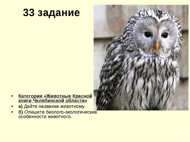 33 задание Категория «Животные Красной книги Челябинской области» а) Дайте на...
