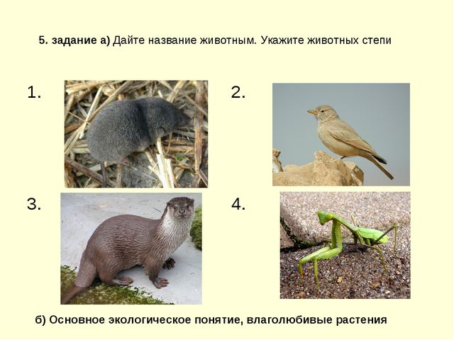 5. задание а) Дайте название животным. Укажите животных степи б) Основное эко...