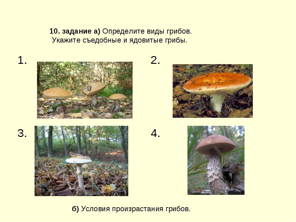 б) Условия произрастания грибов. 10. задание а) Определите виды грибов. Укажи...