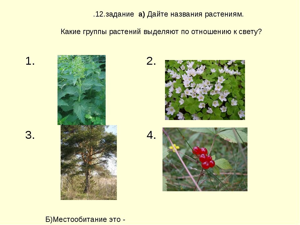 .12.задание а) Дайте названия растениям. Какие группы растений выделяют по от...