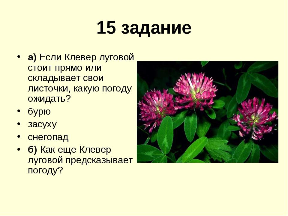15 задание а) Если Клевер луговой стоит прямо или складывает свои листочки, к...