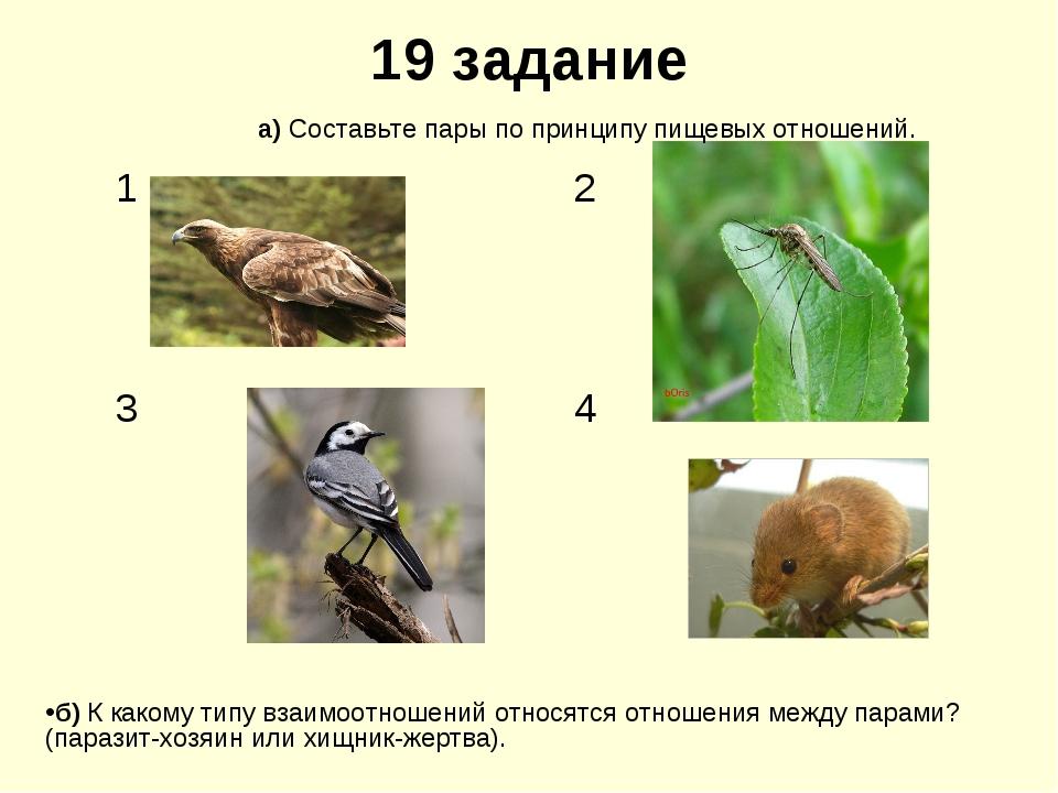 19 задание б) К какому типу взаимоотношений относятся отношения между парами?...