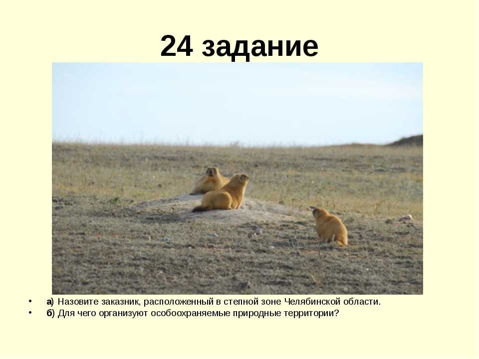 24 задание а) Назовите заказник, расположенный в степной зоне Челябинской обл...