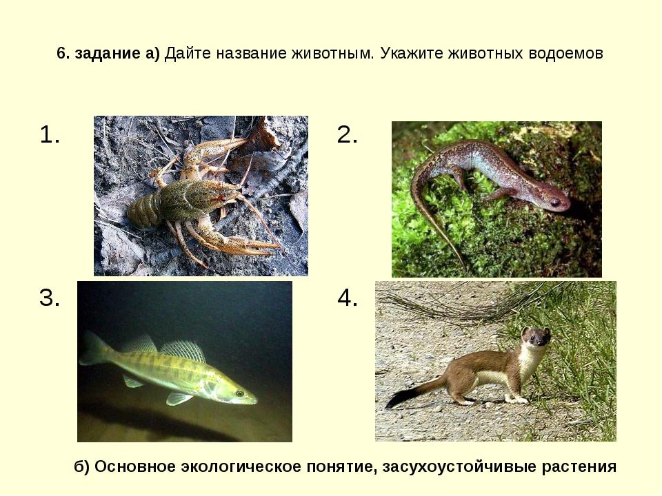 6. задание а) Дайте название животным. Укажите животных водоемов б) Основное...