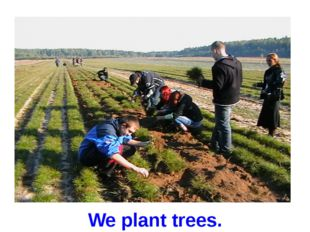 We plant trees.