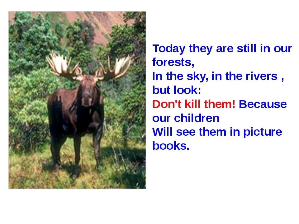Today they are still in our forests, In the sky, in the rivers , but look: Do...