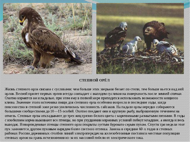 СТЕПНОЙ ОРЁЛ Жизнь степного орла связана с сусликами: чем больше этих зверько...