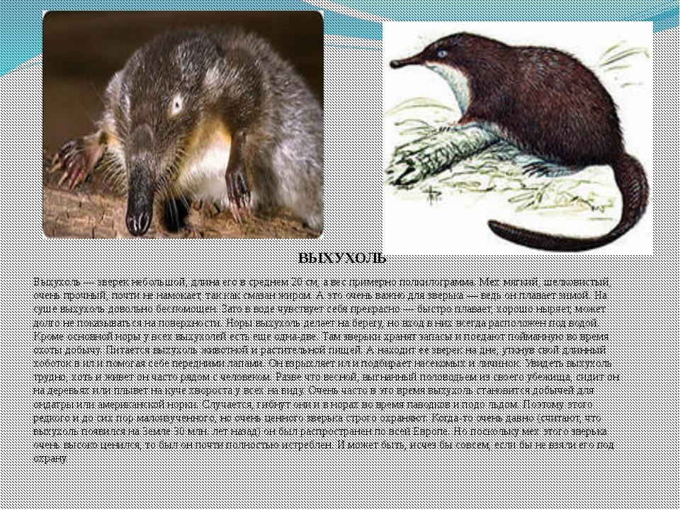 биология животные растения картинки с названиями время они поддерживали