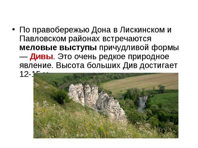 По правобережью Дона в Лискинском и Павловском районах встречаются меловые вы...