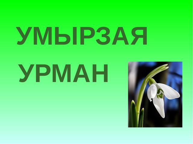 УРМАН УМЫРЗАЯ