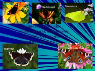 Среди насекомых есть много видов, которые не приносят особого вреда и в то же