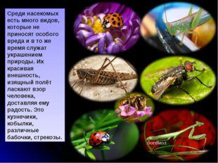 Стрекоза. Изящная внешность этих насекомых, их быстрый полёт и яркая окраска