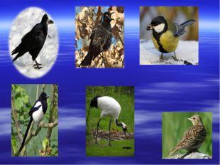 Утки, гуси, чайки. Эти птицы находят себе пищу в воде или около неё. Утки пое