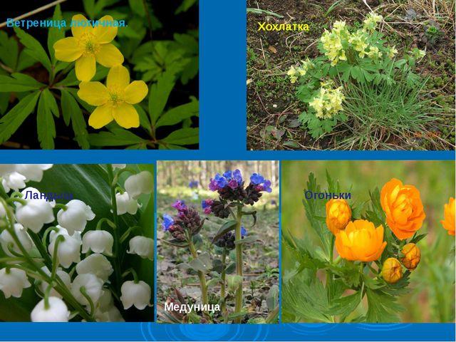 Первоцвет весенний, Желтенький цветок. Потянулся к солнцу Нежный лепесток. П...