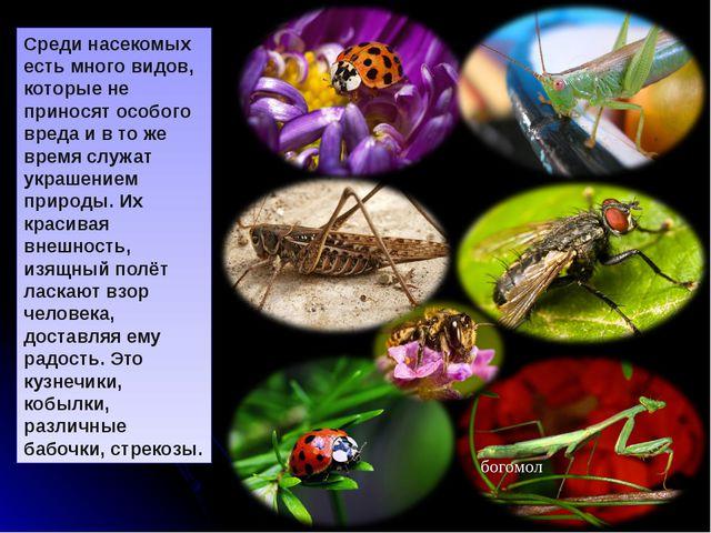 Стрекоза. Изящная внешность этих насекомых, их быстрый полёт и яркая окраска...