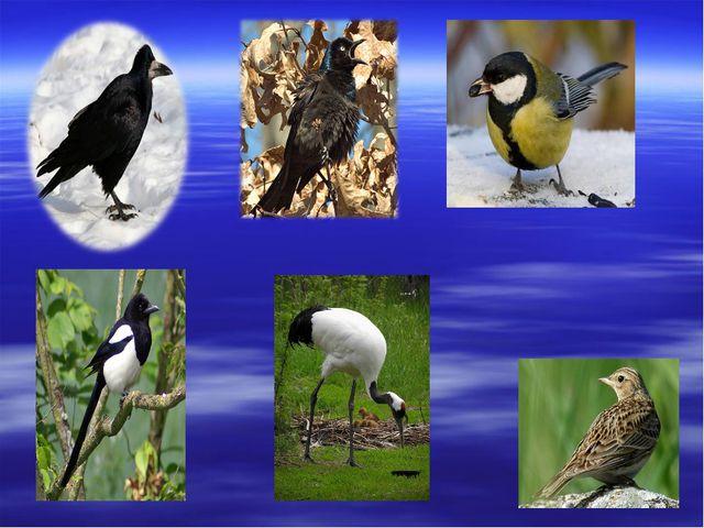Утки, гуси, чайки. Эти птицы находят себе пищу в воде или около неё. Утки пое...