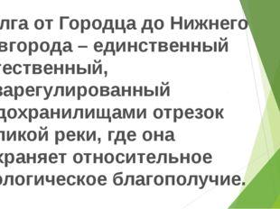Волга от Городца до Нижнего Новгорода – единственный естественный, незарегул