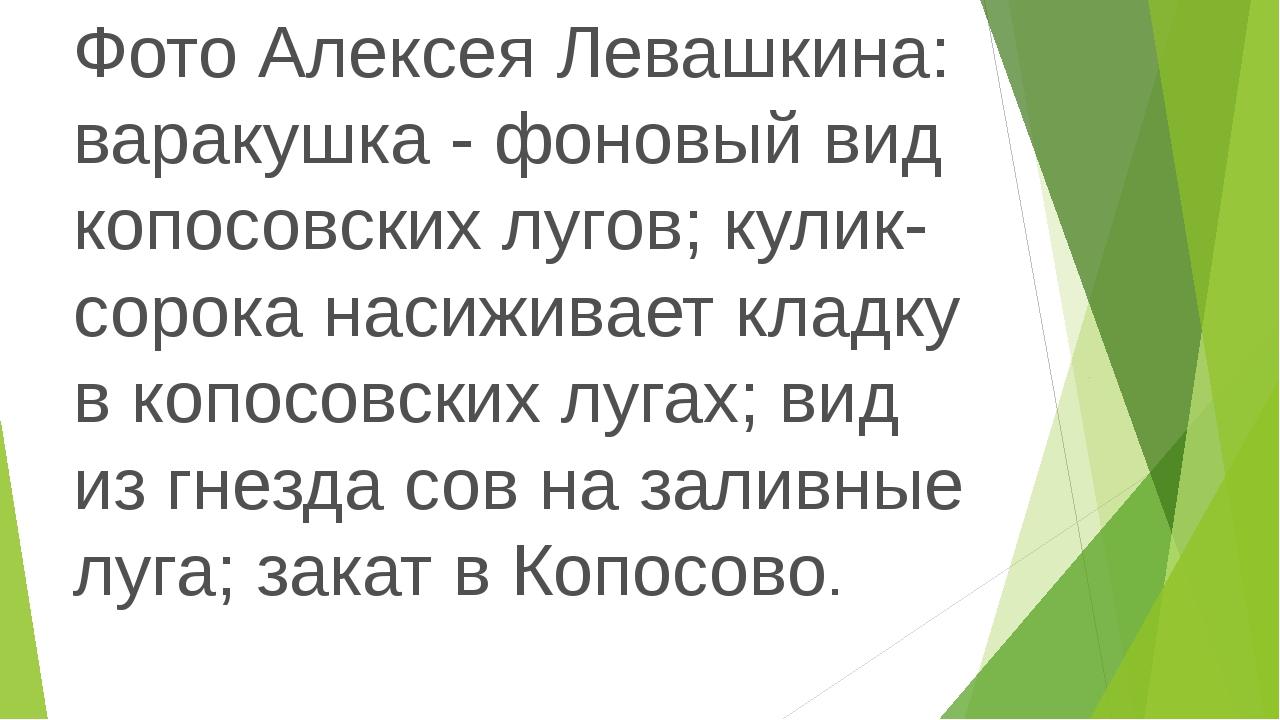 Фото Алексея Левашкина: варакушка - фоновый вид копосовских лугов; кулик-соро...