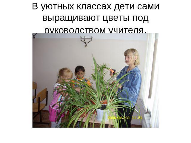 В уютных классах дети сами выращивают цветы под руководством учителя.