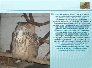 Посетители зоопарка могут видеть много различных видов животных: диких и одом