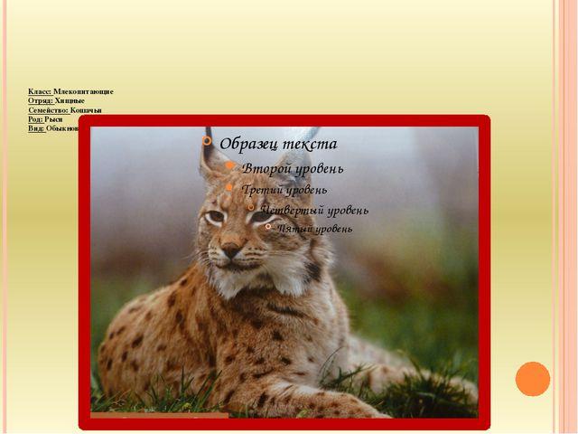 Класс: Млекопитающие Отряд: Хищные Семейство: Кошачьи Род: Рыси Вид: Обыкнов...