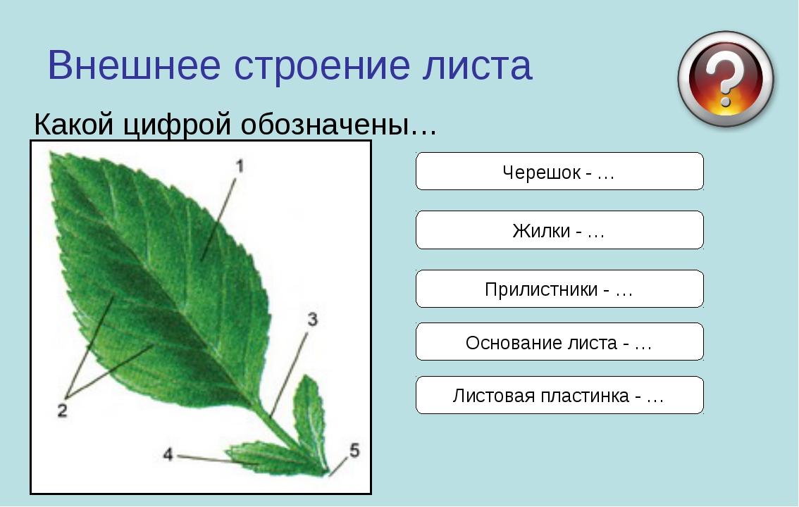 C:\Users\Пользователь\Desktop\img1.jpg