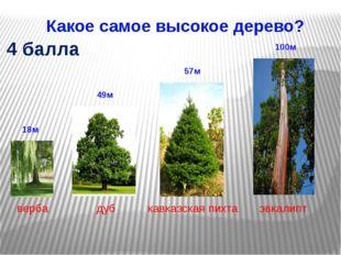 Какое самое высокое дерево? 4 балла дуб кавказская пихта верба эвкалипт 57м 4