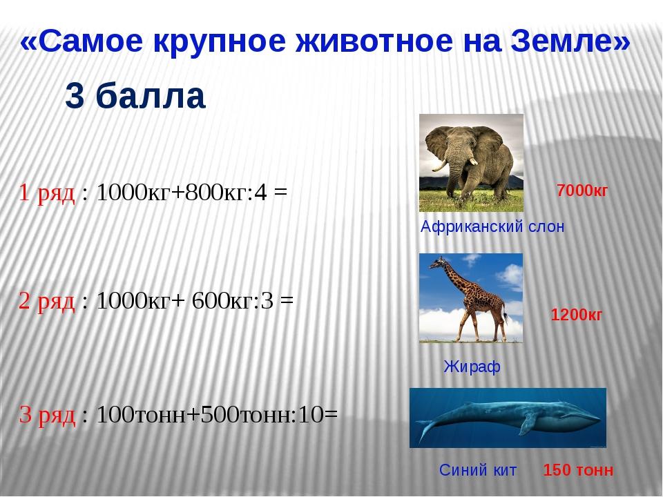 «Самое крупное животное на Земле» Африканский слон Жираф 1 ряд : 1000кг+800кг...