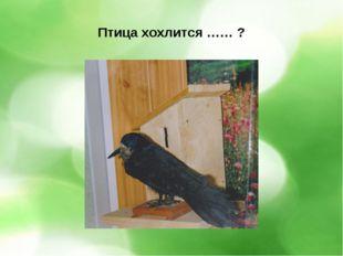 Птица хохлится …… ?