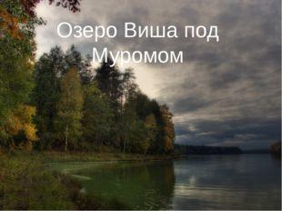 Озеро Виша под Муромом