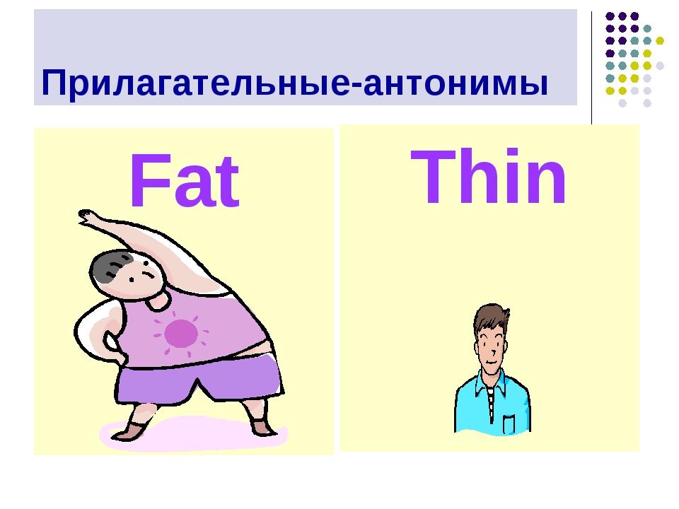 Прилагательные-антонимы Fat Thin