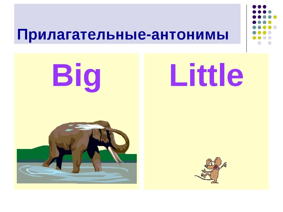 Прилагательные-антонимы Big Little