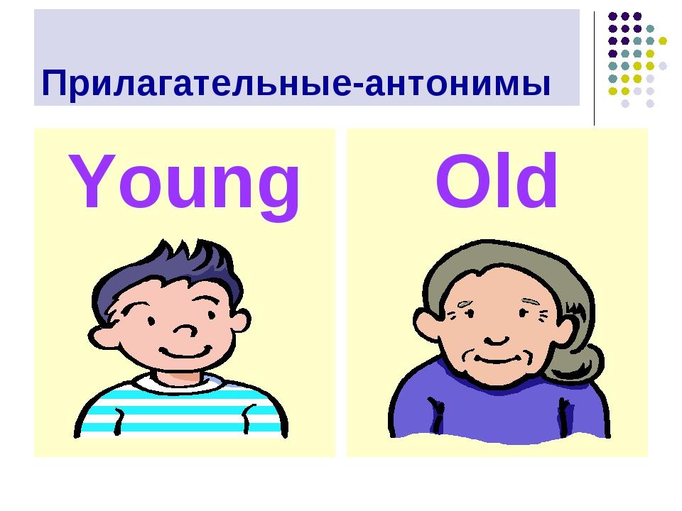 Прилагательные-антонимы Young Old