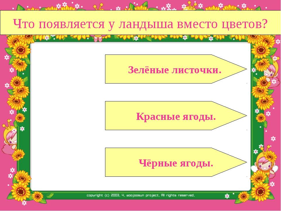Что появляется у ландыша вместо цветов? Красные ягоды. Чёрные ягоды. Зелёные...