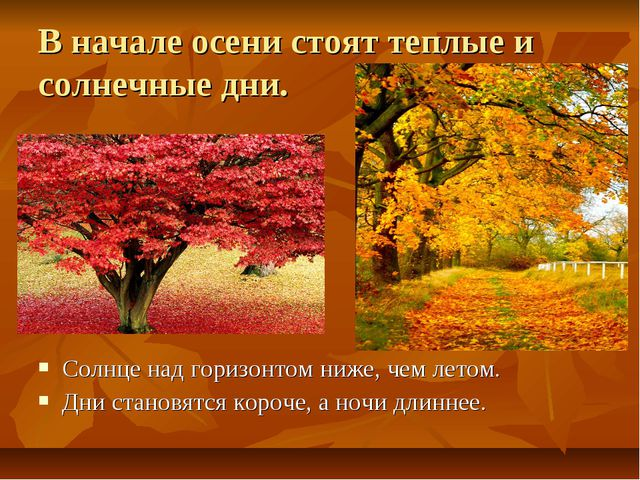 В начале осени стоят теплые и солнечные дни. Солнце над горизонтом ниже, чем...