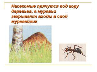 Насекомые прячутся под кору деревьев, а муравьи закрывают входы в свой мураве