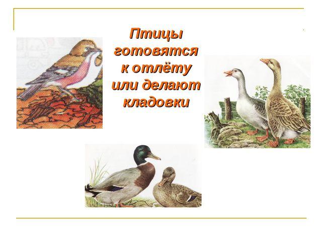Птицы готовятся к отлёту или делают кладовки