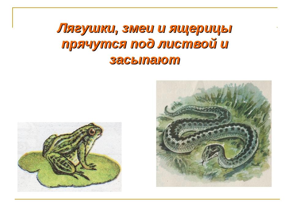 Лягушки, змеи и ящерицы прячутся под листвой и засыпают