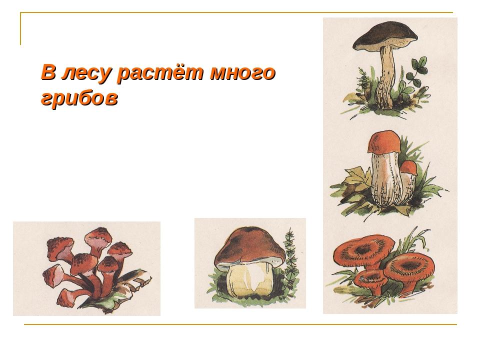 В лесу растёт много грибов