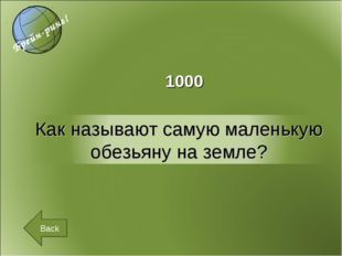 1000 Back