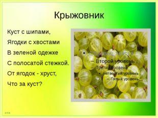 Крыжовник Куст с шипами, Ягодки с хвостами В зеленой одежке С полосатой стежк