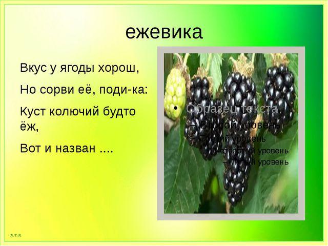 ежевика Вкус у ягоды хорош, Но сорви её, поди-ка: Куст колючий будто ёж, Вот...