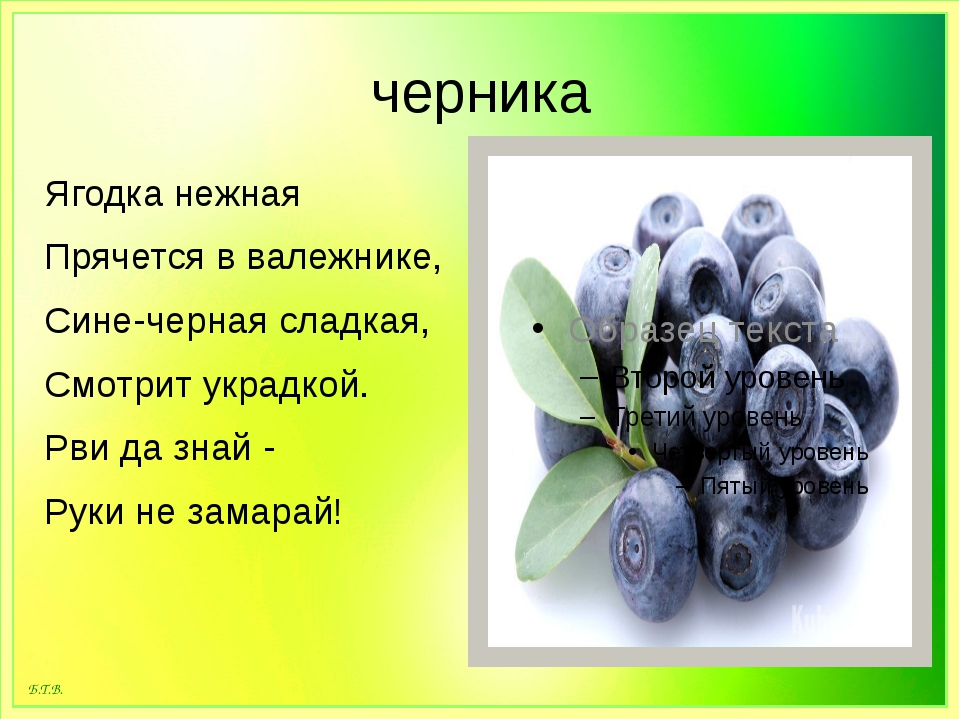 черника Ягодка нежная Прячется в валежнике, Сине-черная сладкая, Смотрит укра...