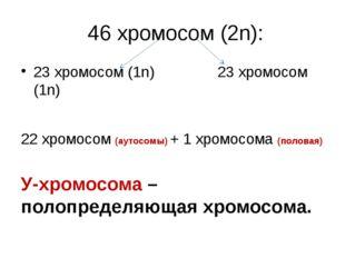 46 хромосом (2n): 23 хромосом (1n)               23 хромосом (1n) 22 хромос