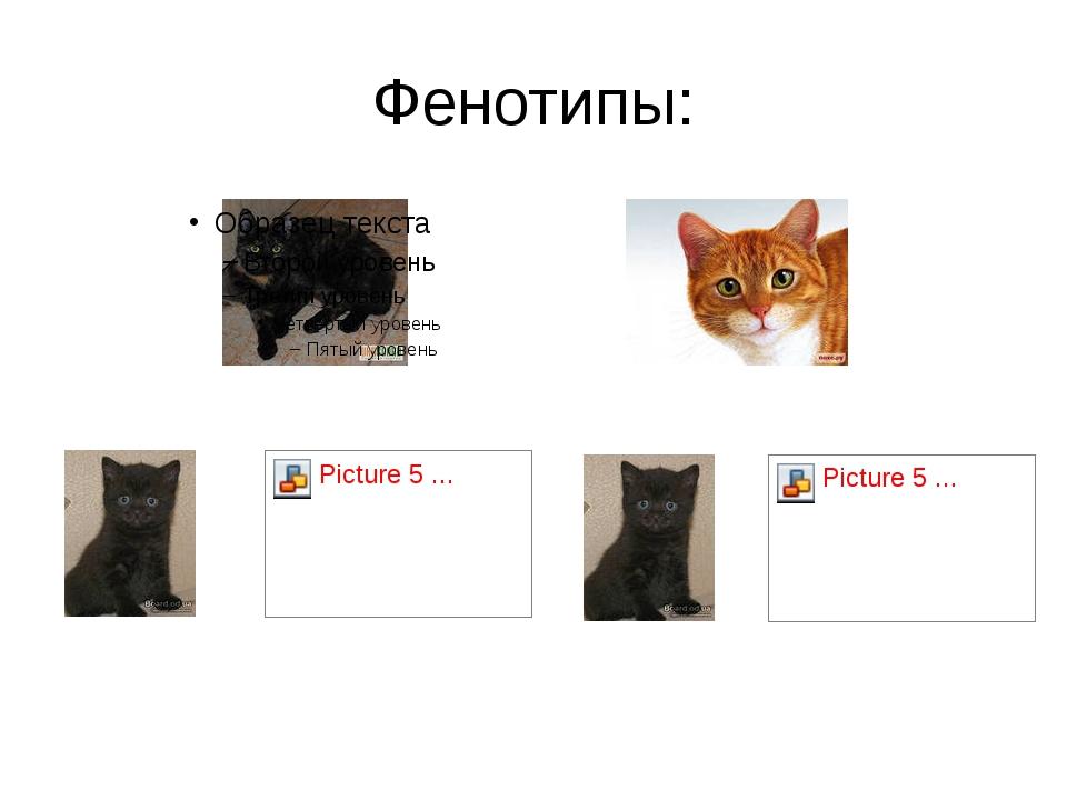 Фенотипы: