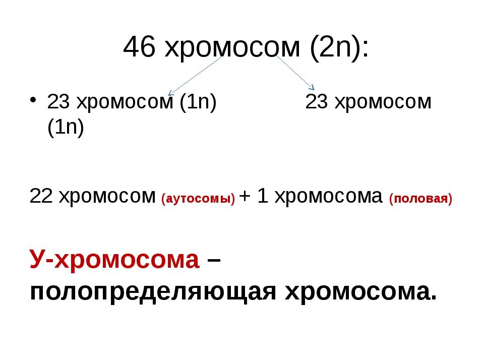 46 хромосом (2n): 23 хромосом (1n)               23 хромосом (1n) 22 хромос...