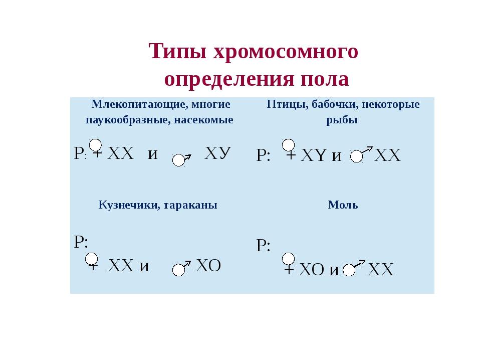 Типы хромосомного  определения пола