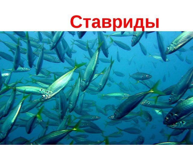 Ставриды